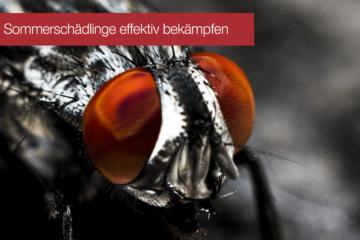 Fruchtfliegen und Ameisen effektiv bekämpfen
